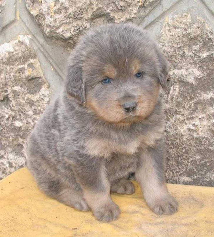 35 perros con el pelaje más espectacular y único que te puedas imaginar Markings-33