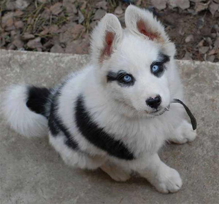 35 perros con el pelaje más espectacular y único que te puedas imaginar Dog-coat-markings-1