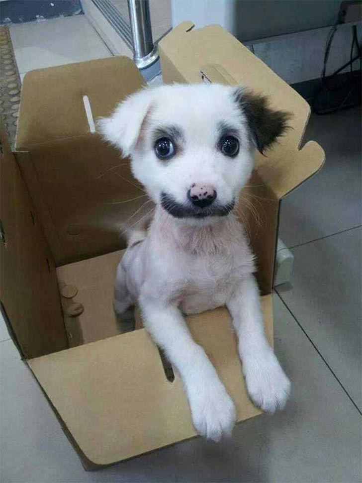 35 perros con el pelaje más espectacular y único que te puedas imaginar Dog-coat-markings-20
