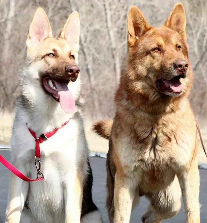 35 perros con el pelaje más espectacular y único que te puedas imaginar Dog-coat-markings-34