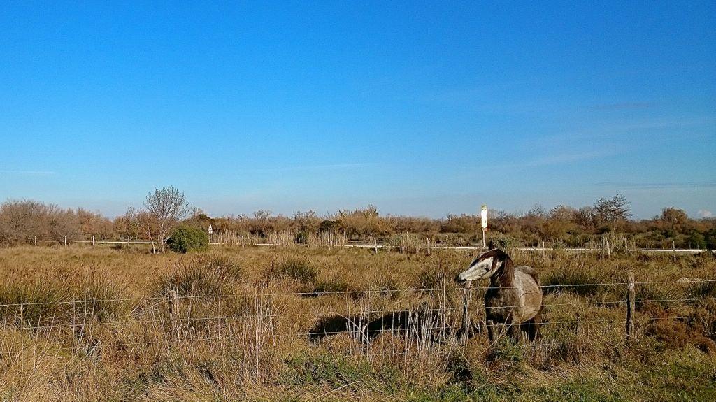 CR en images d'une vadrouille hivernale en Languedoc  12
