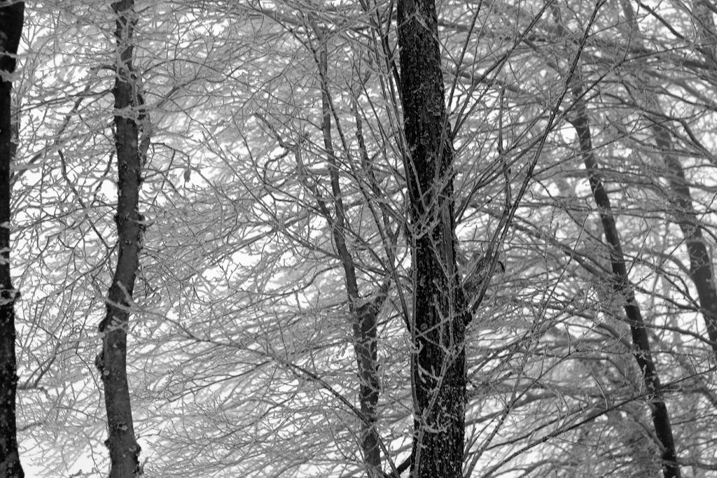 CR en images d'une vadrouille hivernale en Languedoc  32