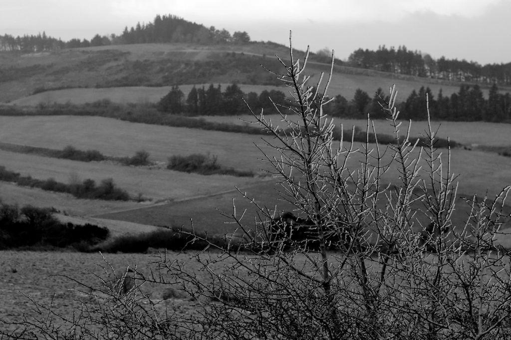 CR en images d'une vadrouille hivernale en Languedoc  35