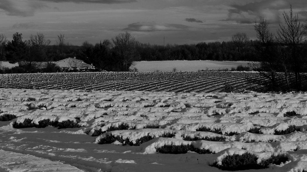 CR en images d'une vadrouille hivernale en Languedoc  53