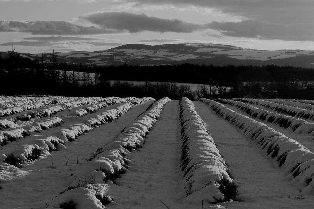CR en images d'une vadrouille hivernale en Languedoc  54