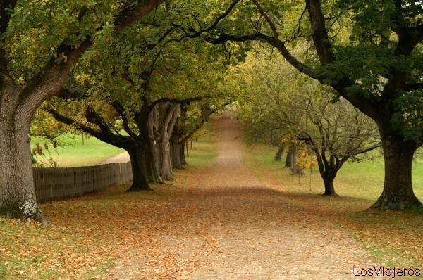 ... Y caen las hojas, llega ....¡¡¡ EL Otoño !!! - Página 2 20111027-042849-p-m