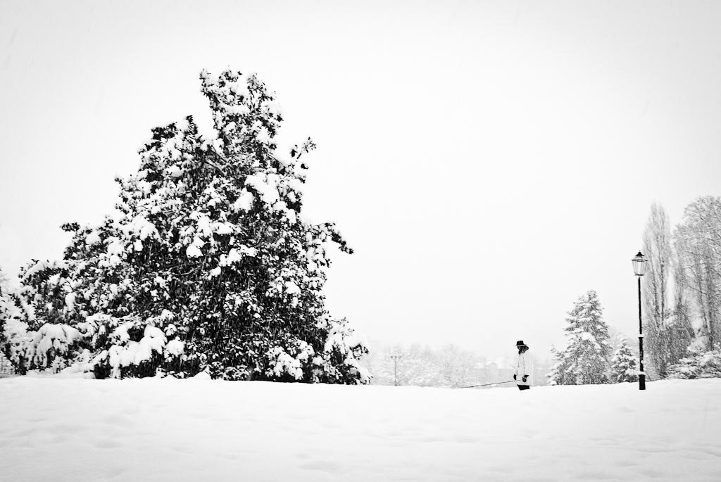Torino sotto la neve Lrweb-8887
