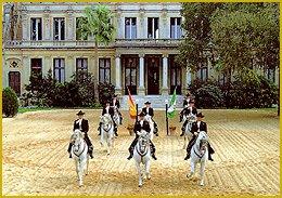 Cheval : Les différentes races existantes au Moyen Age Jerez