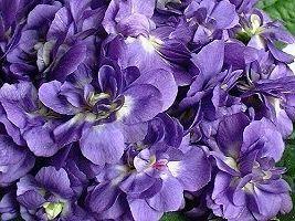 Joyeux Anniversaire Violette  - Page 2 Fe513c0d