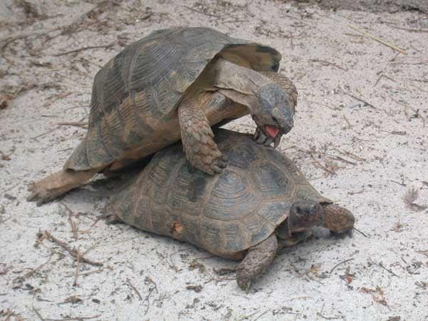 la tortue 1332d9f2