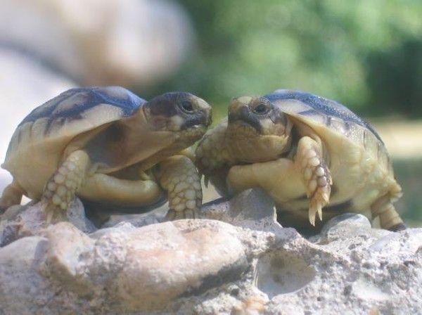la tortue 62ab3d2c