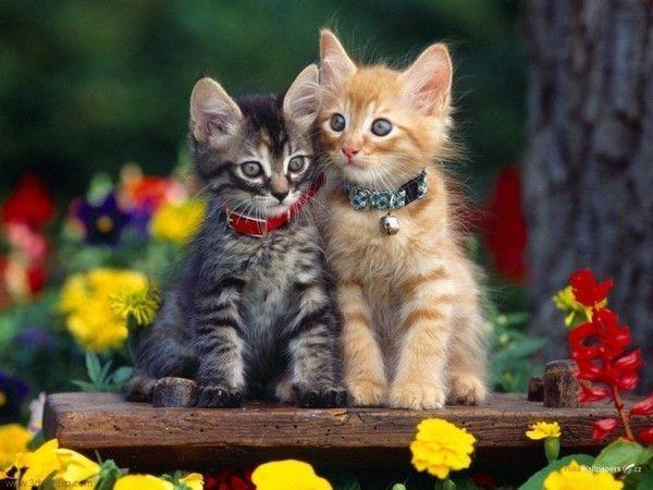 les chats!! - Page 2 7b874264
