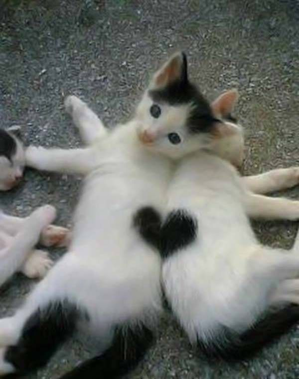 les chats!! - Page 2 Aad744c5
