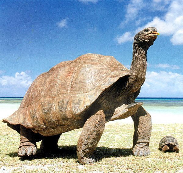 la tortue Acc1aa64
