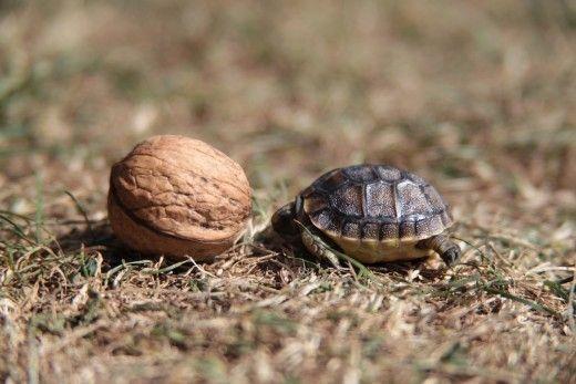 la tortue Ddd023c7