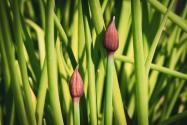 """Concours photos avril 2021 """"C'est le printemps"""" - Page 4 User_3387_Printemps"""