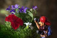 """Concours photos avril 2021 """"C'est le printemps"""" - Page 4 User_3638_Mpro"""