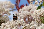 """Concours photos avril 2021 """"C'est le printemps"""" - Page 4 User_3642_Cestprintemps"""