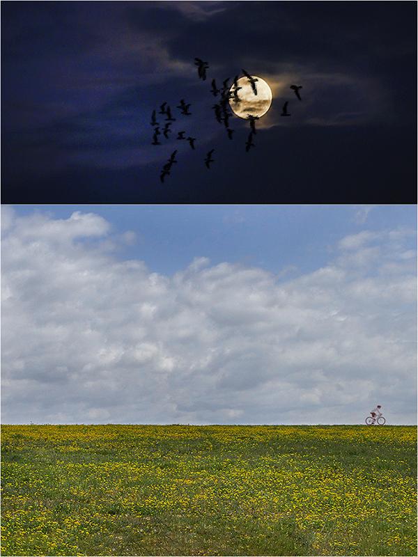 """Concours photos avril 2021 """"C'est le printemps"""" - Page 3 User_1805_Avril2021"""