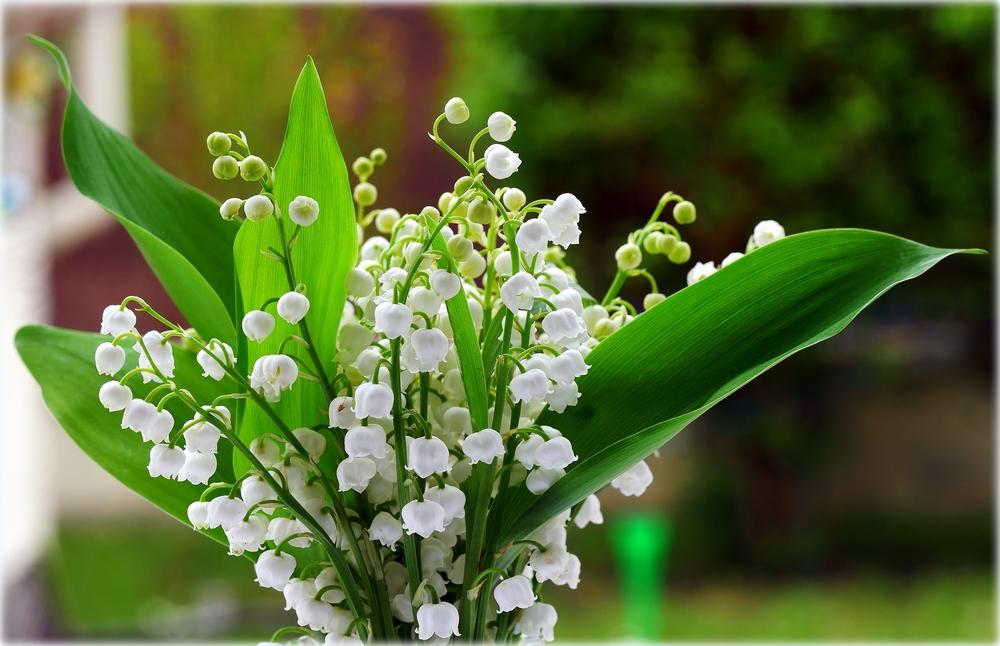 """Concours photos avril 2021 """"C'est le printemps"""" - Page 3 User_3647_P1020060r"""