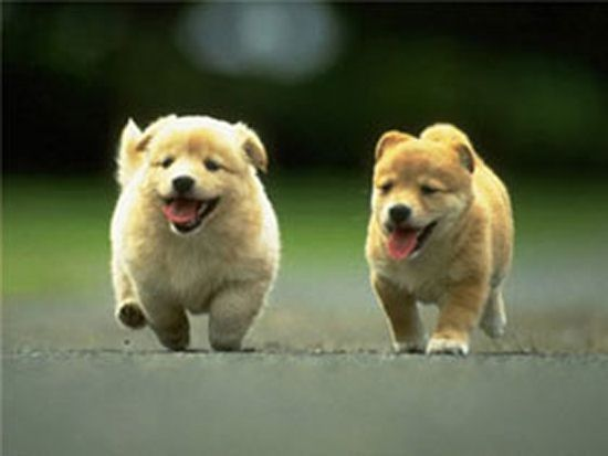 Crottes de chiens Akaw2k9s