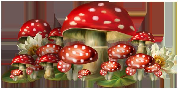 Champignons 501f9338