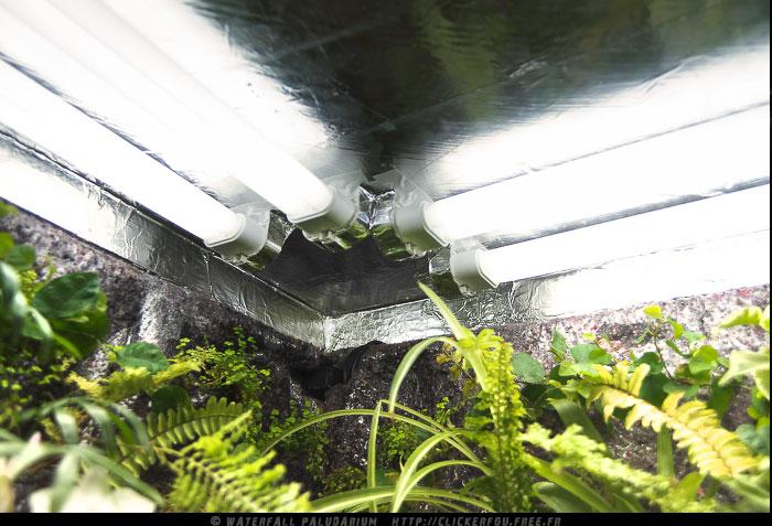 Eclairage sans vitre de protection Waterfall-Paludarium_077
