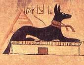 Conhece o Podengo Português ? Farao