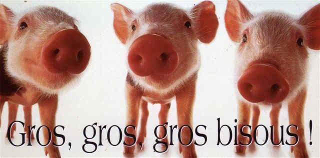 Lundi 9 novembre Cochons-gros-bisous