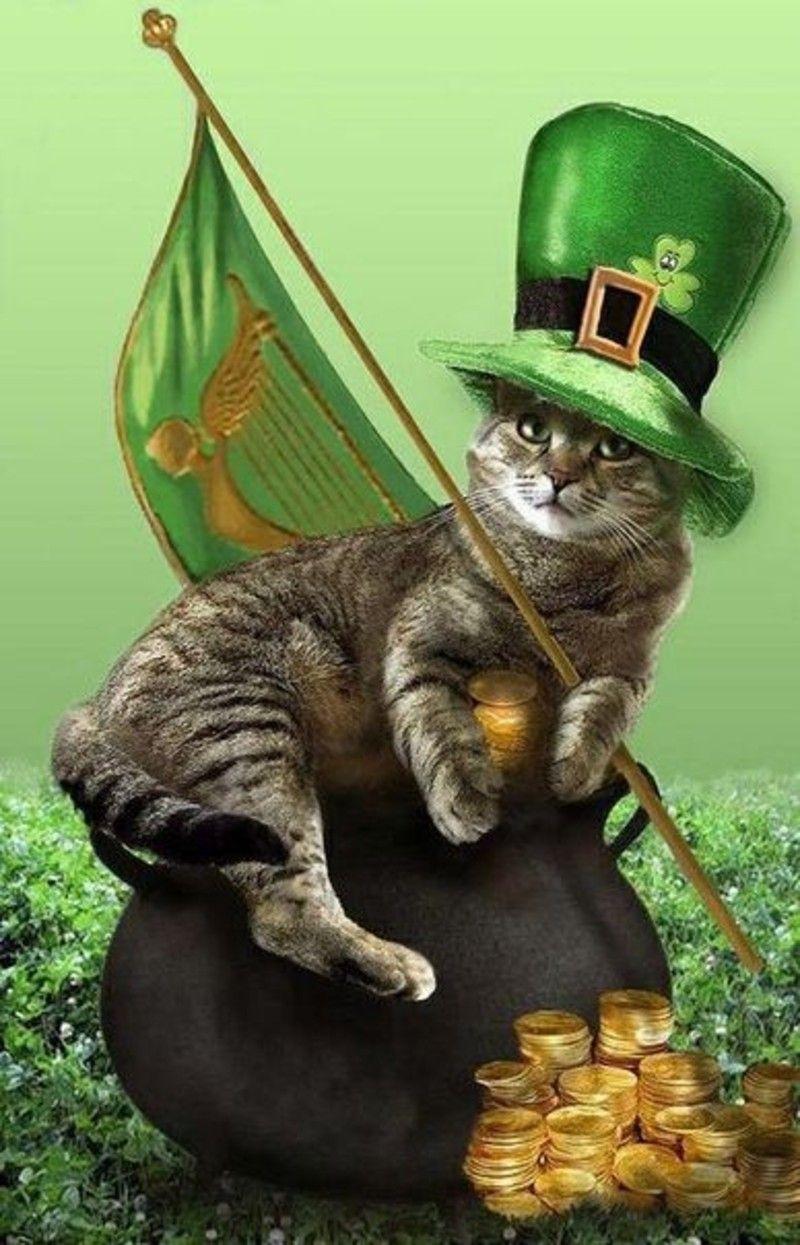 Bon Vendredi  -  Joyeuse Saint Patrick  B83ff184