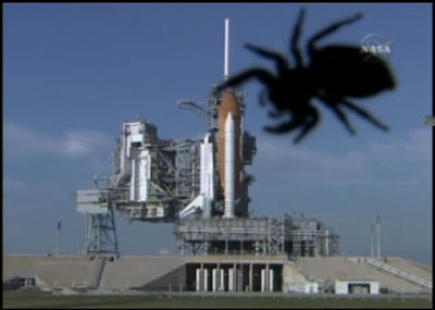 [Candidature] Photo du mois (Avril 2014) Space_shuttle_spider