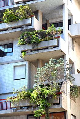 Цветы на балконе Balcony-plants-database-complete-gardens-software-cd-rom