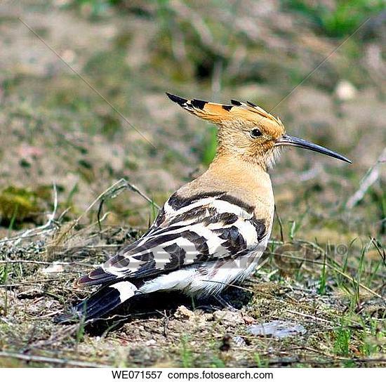Lietderīga informācija par dzīvniekiem un putniem, online web kameras WE071557