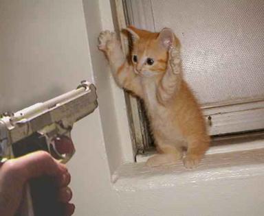 IMPORTANTÍSSIMO - Caça ás matrículas dissimuladas - Página 3 Assalto-gato