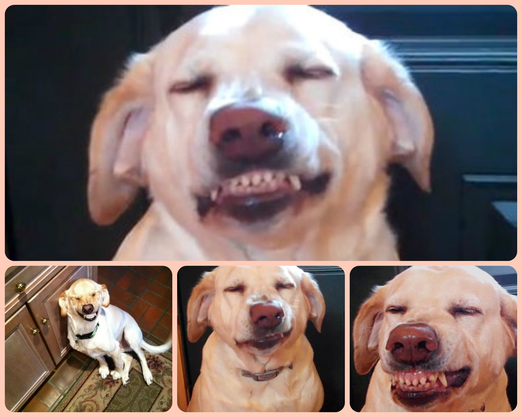 Pourquoi le chien ne connaît pas la culpabilité? - Page 2 Dog-guilt-_dog-shaming-_guilty-dog
