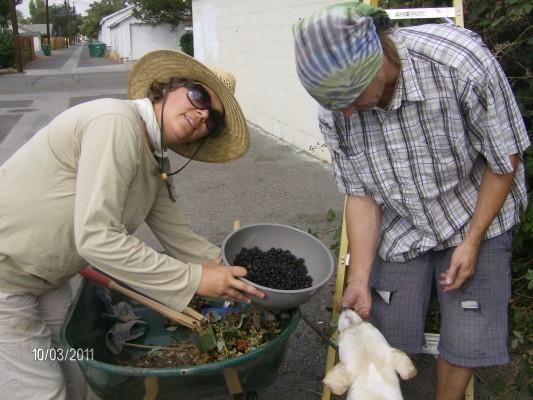 In Your Own Backyard… Blackberries-3-533x400