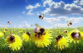 Urban Farm Project Heading to Bozeman Bees