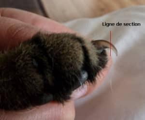 Dégriffage du chat Couper-les-griffes1-300x248