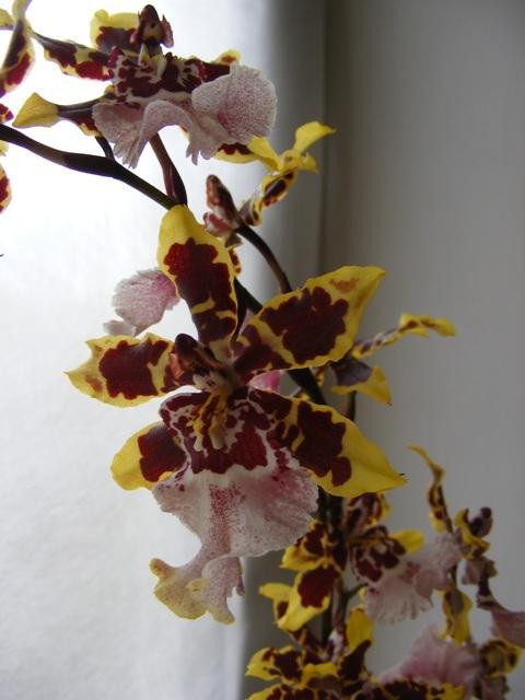 Листья, корни... Главное - цветок! - Страница 12 H-2396