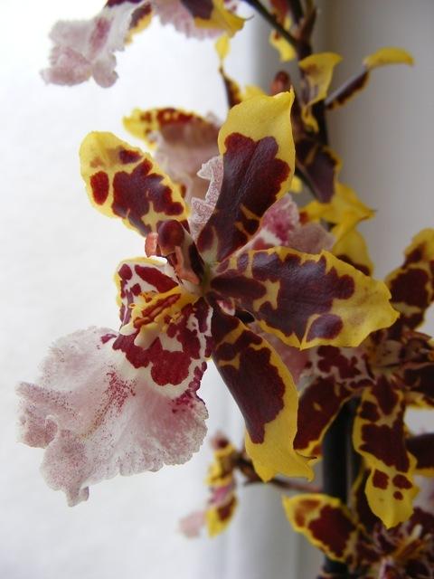 Листья, корни... Главное - цветок! - Страница 12 H-2397