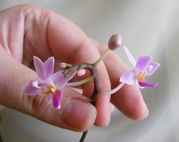 Листья, корни... Главное - цветок! - Страница 12 H-2491