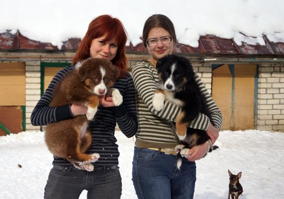 Аусси в Ставрополе H-4517