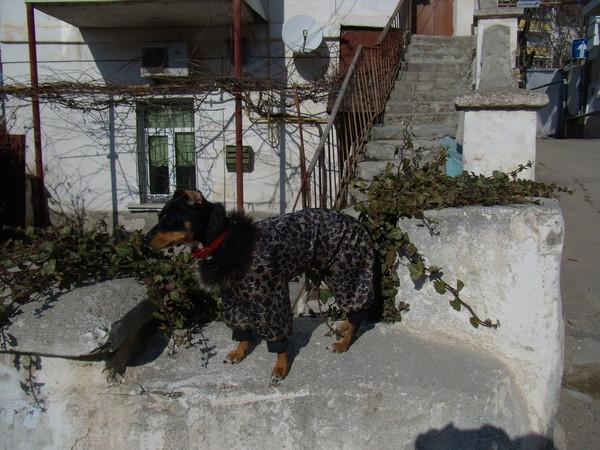 Одежда для собак. I-587