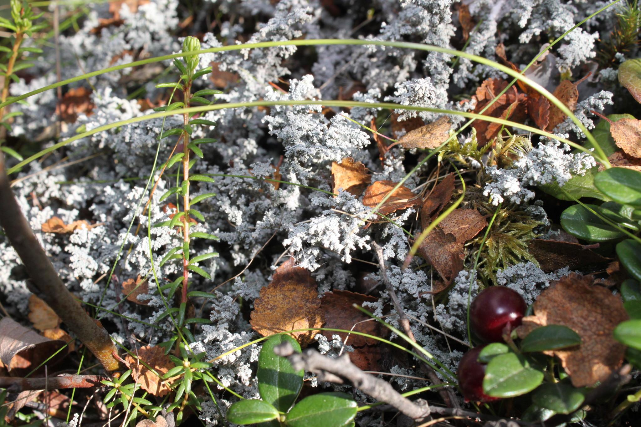 Осенний фотоконкурс S-913
