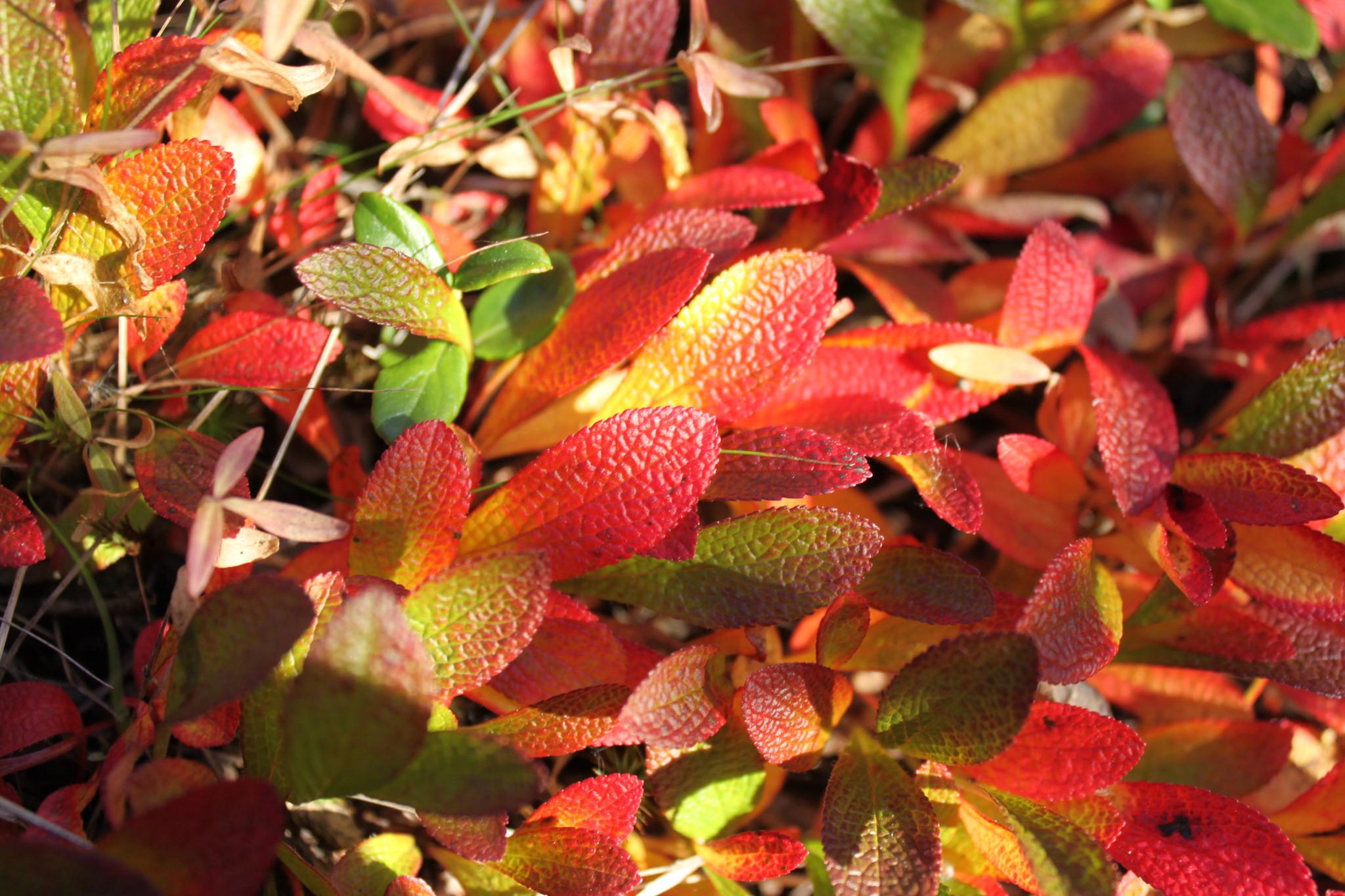 Осенний фотоконкурс S-915