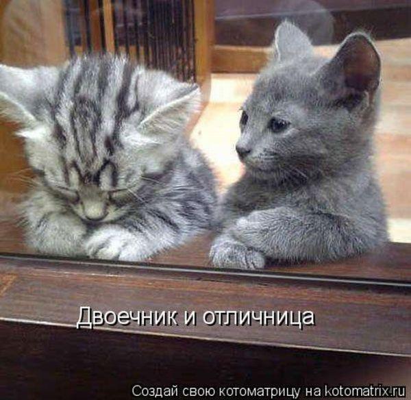 Фотографии кошек - Страница 2 I-14798