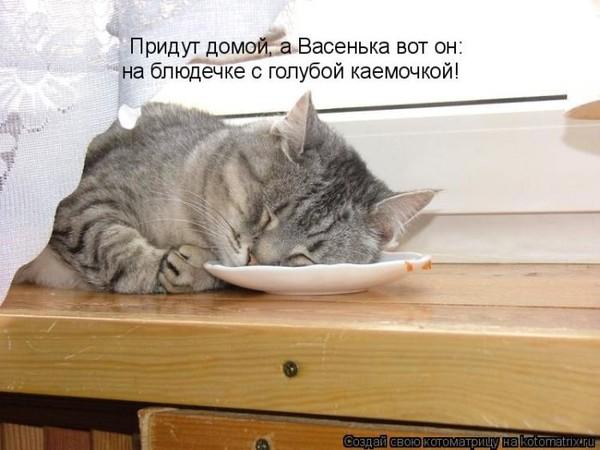 Фотографии кошек - Страница 2 I-14799