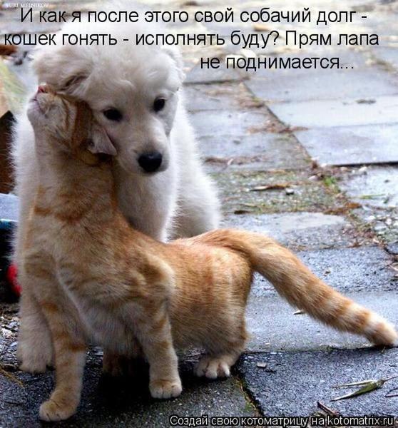 Фотографии кошек - Страница 2 I-14800