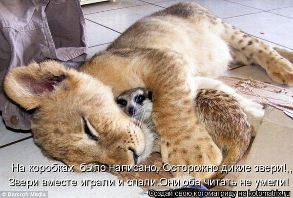Фотографии кошек - Страница 2 I-14801