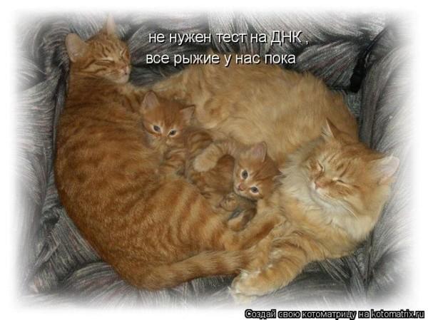 Фотографии кошек - Страница 2 I-14802